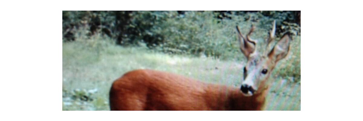 Themenwelt bei Jagdaktiv - Themenwelt bei Jagdaktiv